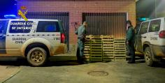 La temporada micológica termina con la Guardia Civil incautando más de una tonelada de níscalos