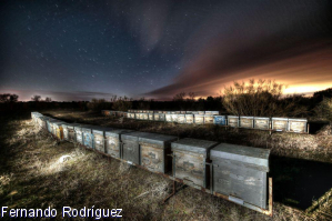 Hay 389 imágenes que quieren ser la mejor del XIX Concurso Internacional de Fotografía Apícola de Azuqueca