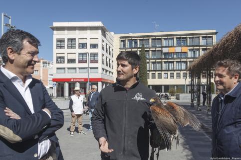 El Ayuntamiento pone en marcha medidas para controlar la proliferación de aves