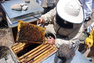Un programa de tutelajes apícolas, la novedosa propuesta de la Asociación de Apicultores de Guadalajara