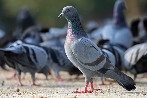 Sigue la 'lucha' contra la proliferación de aves en Guadalajara