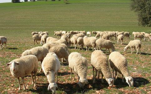 ASAJA pide ayudas para los ganaderos afectados por la sequía