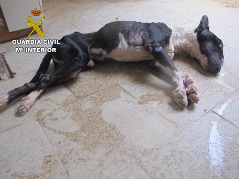 La Guardia Civil investiga a una persona en Brihuega por dejar morir de hambre a su perro