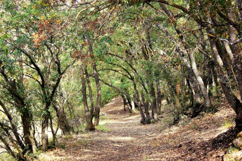 Yebes blinda la protección y conservación de Valdenazar