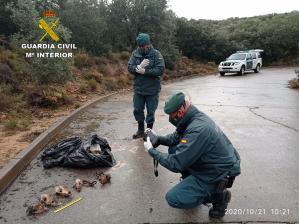 Encuentran en El Casar un cementerio ilegal de animales domésticos