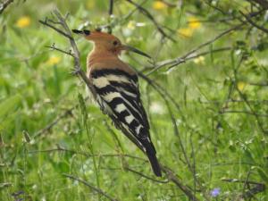 El paraíso ornitológico de la Sierra Norte de Guadalajara