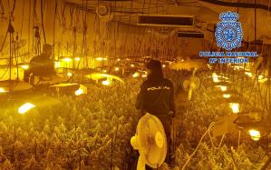 La Policía Nacional desmantela en una nave industrial una plantación 'indoor' con 2.635 plantas de marihuana