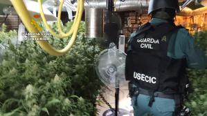 Enésimo detenido en El Casar por estar cultivando 787 plantas de marihuana