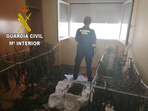 La Guardia Civil asesta sendos golpes a quienes cultivan marihuana en Chiloeches y Fuentenovilla