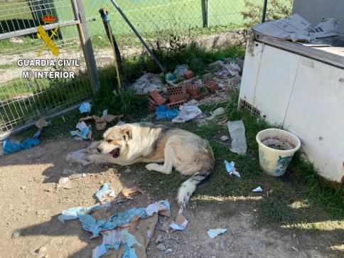 El Seprona localiza 15 perros en condiciones deficientes en Poveda de la Sierra